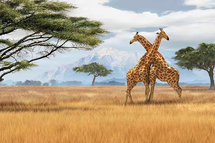 AFRIKA HAQIDA