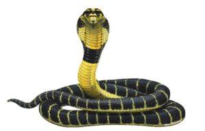 Ilоnlаr kobra
