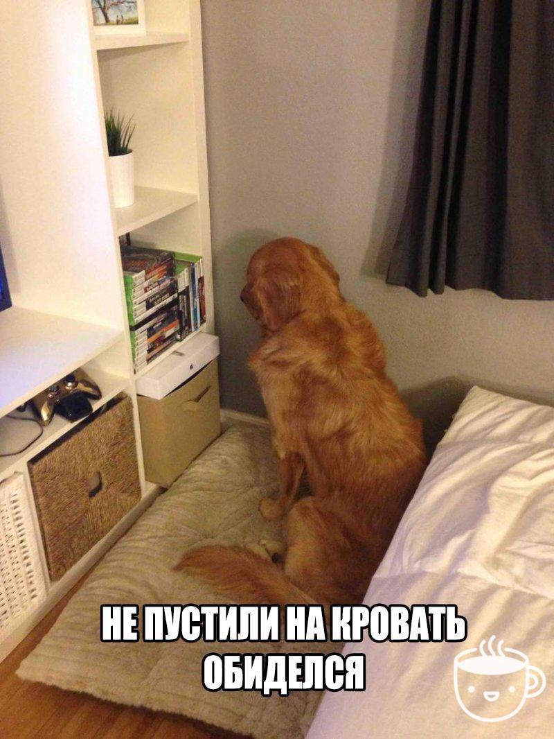 шерлар уз